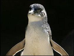 Penguin200